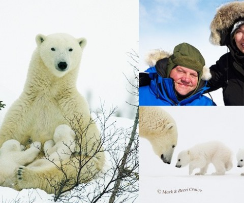 Birdzilla.com's Husband & Wife Global Adventurers Team Captures Images of Polar Bear